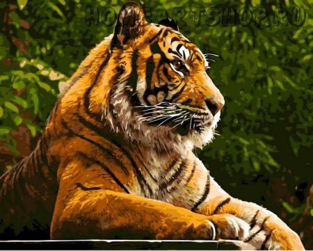 "Раскраска по номерам ""Амурский тигр"""