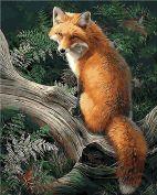 "Раскраска по номерам ""Лиса в лесу"" худ. Джонни Джонсон-Годси"