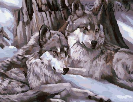 "Картина по номерам ""Волчий взгляд"" 50х65"