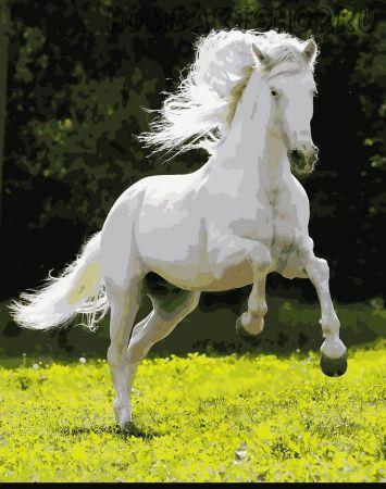 """Раскраска по номерам """"Белогривый конь"""""""